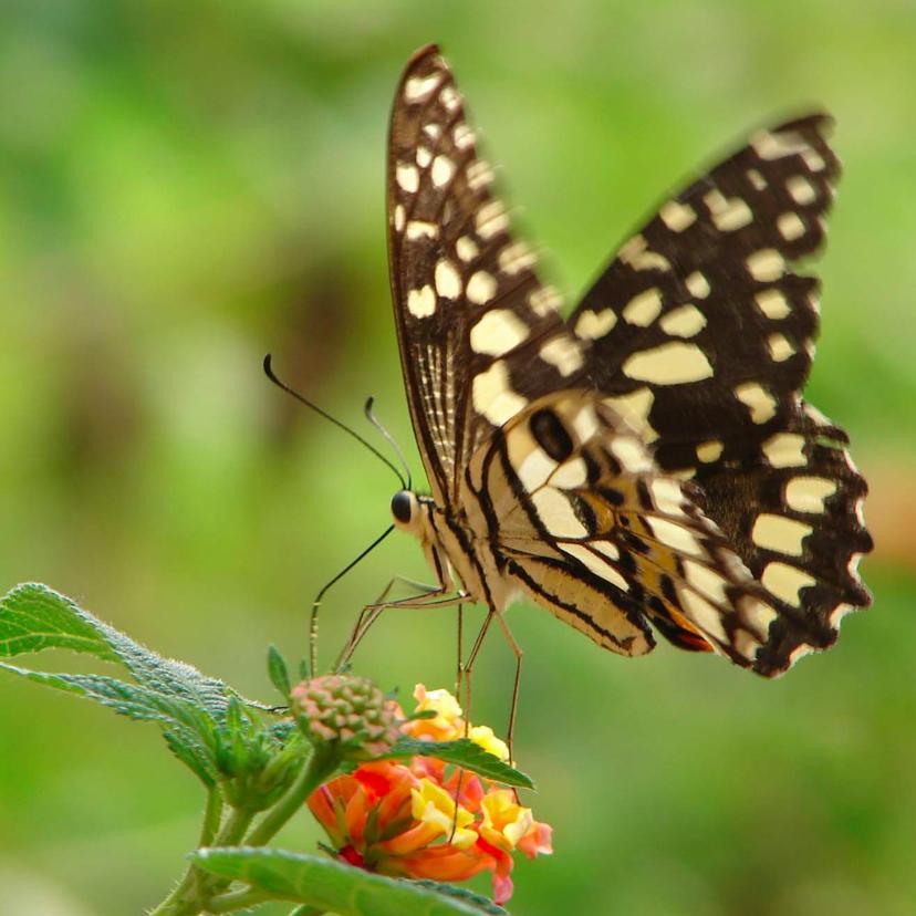 Dierenkaarten - Dierenkaart Vlinder op bloem