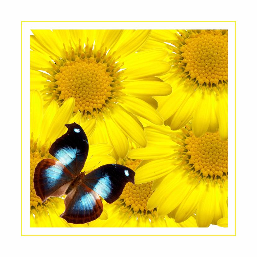 Dierenkaarten - Dierenkaart vlinder op gele bloemen
