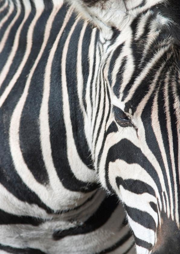 Dierenkaarten - Dierenkaart zebra
