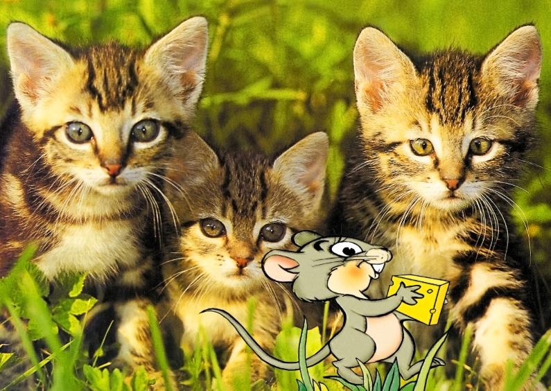 Dierenkaarten - Grappige dierenkaart 3 katten met muisje