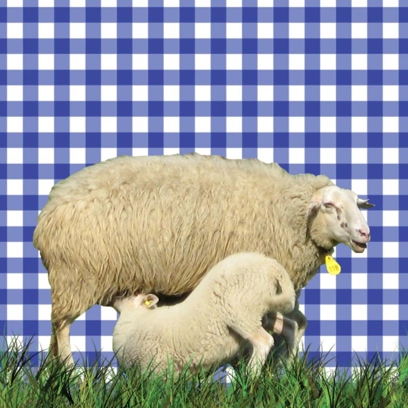 Dierenkaarten - Hollandse schapen