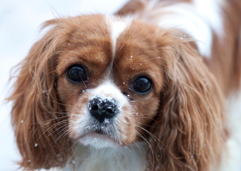Dierenkaarten - lieve hond in de sneeuw