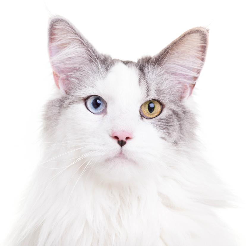 Dierenkaarten - Zomaar een dierenkaart - Kat mooie ogen