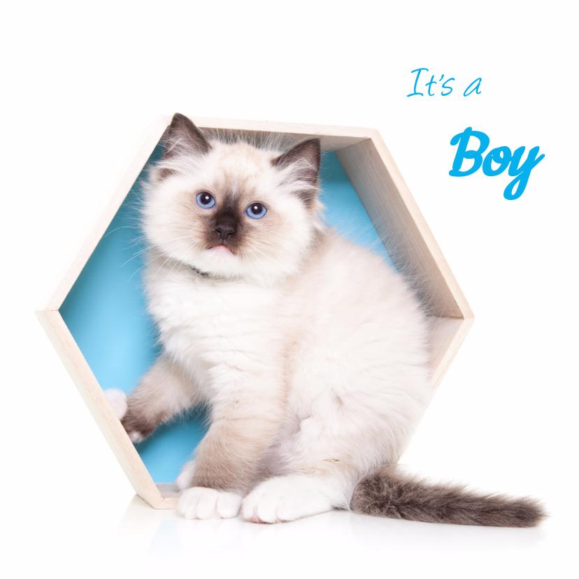 Felicitatiekaarten - Geboortekaart - Kitten It's a boy