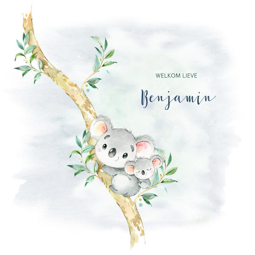 Geboortekaartjes - Geboortekaart jongen koala in boom