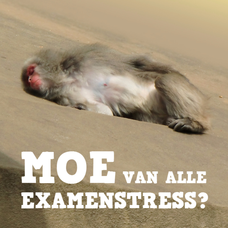 Geslaagd kaarten - Geslaagd aap - uitrusten na examenstress
