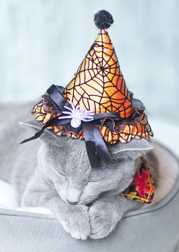 Halloween kaarten - Happy Halloween - kat met een heksenhoedje