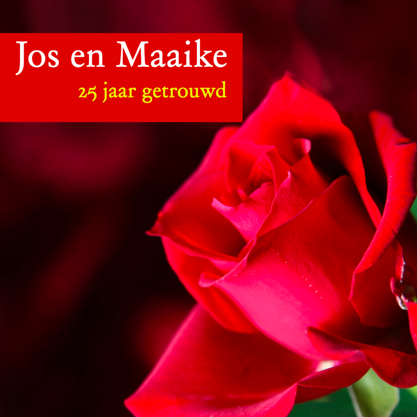 Jubileumkaarten - Mooie kaart met rode roos