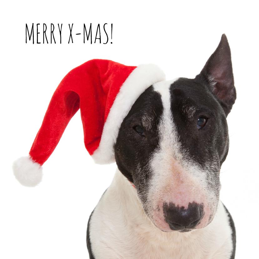 Kerstkaarten - Dieren kerstkaart - Hond - Bull