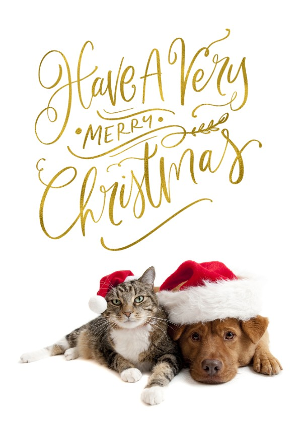 Kerstkaarten - Kerstkaart eigen huisdier Have a Very Merry Christmas