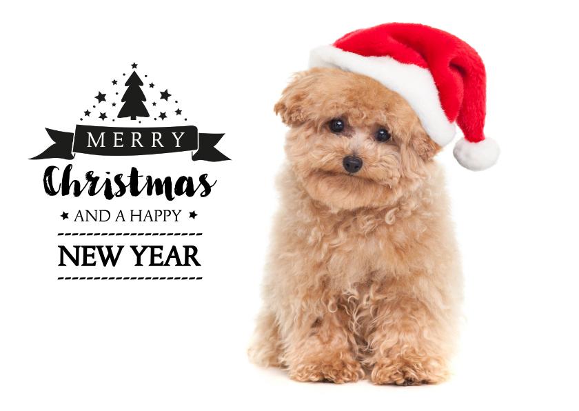 Kerstkaarten - Kerstkaart hond Toy Poodle met kerstmuts