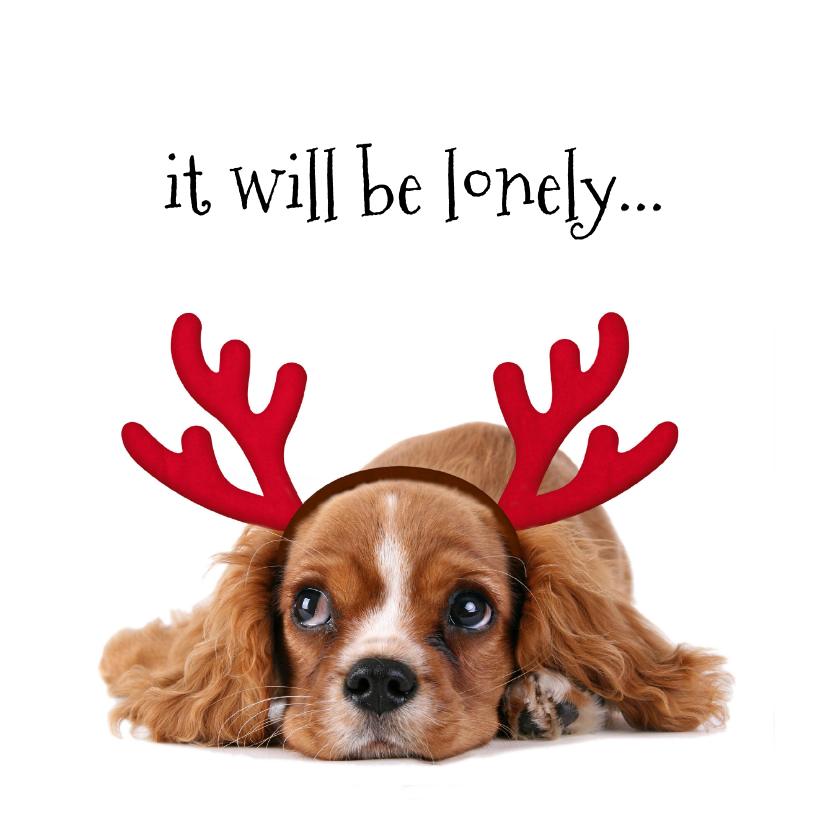 Kerstkaarten - Kerstkaart lief hondje met gewei