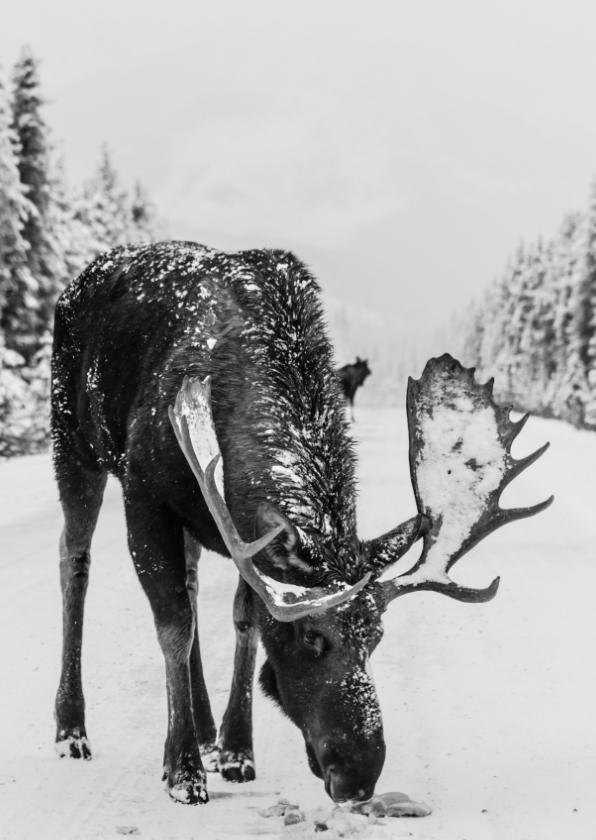 Kerstkaarten - Kerstkaart met eland in de sneeuw