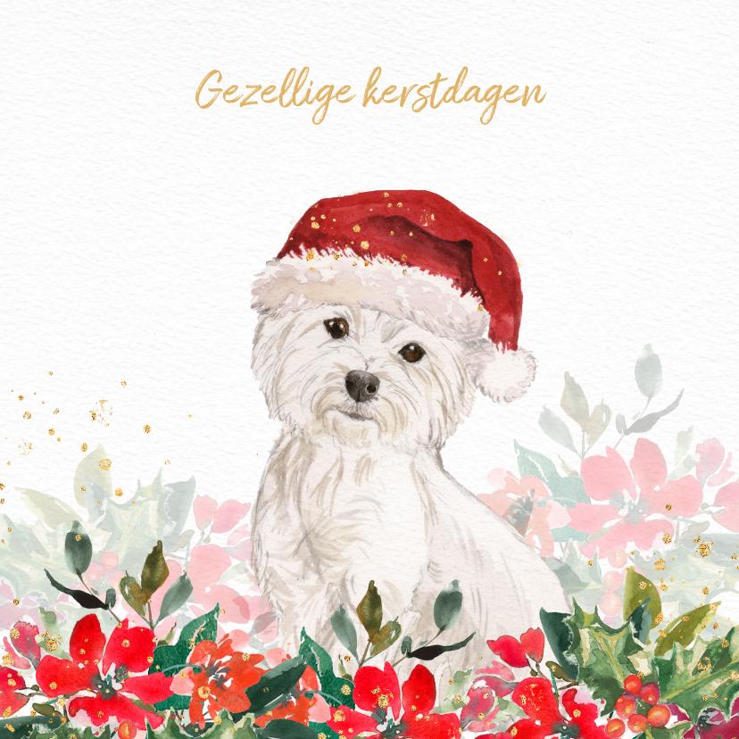Kerstkaarten - Kerstkaart met Maltezer hond, kerstmuts en kerstgroen