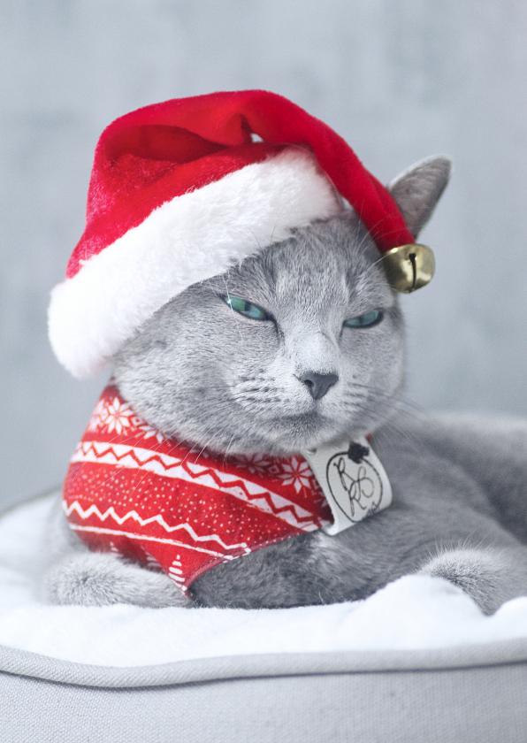 Kerstkaarten - Schattig kerstkaartje met grijze kat en kerstmuts