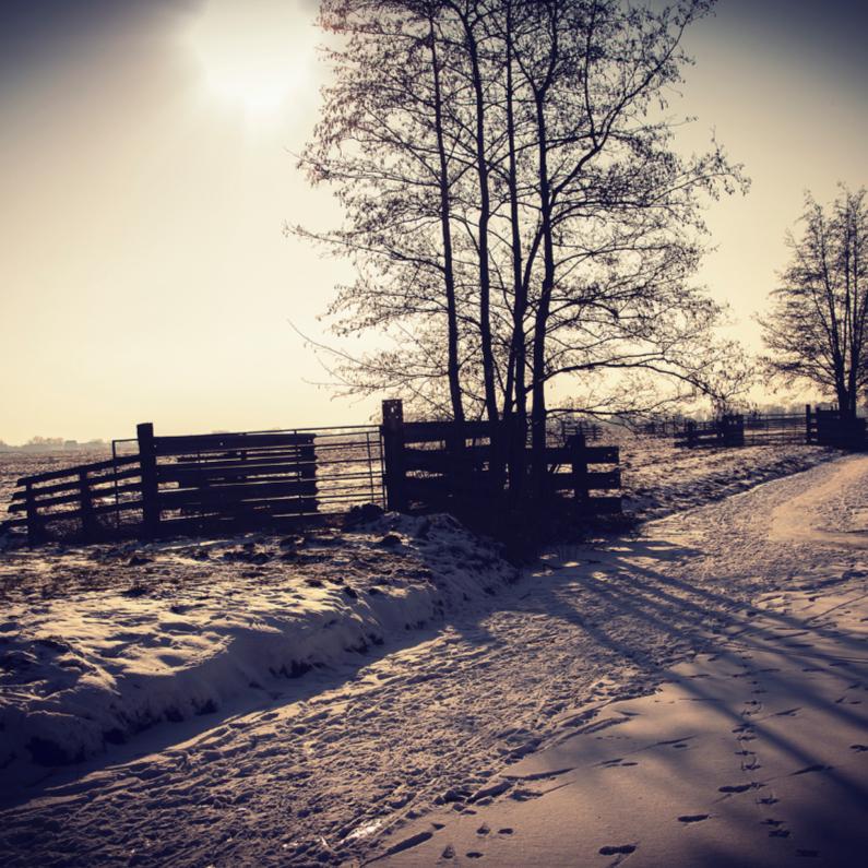 Kerstkaarten - Sneeuwlandschap blanco