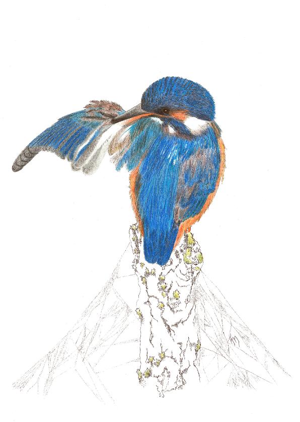 Kunstkaarten - IJsvogeltje op stronk