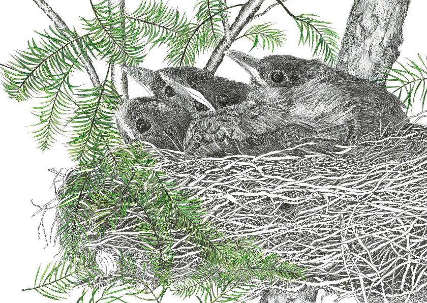 Kunstkaarten - Kunstkaart nest jonge Merels