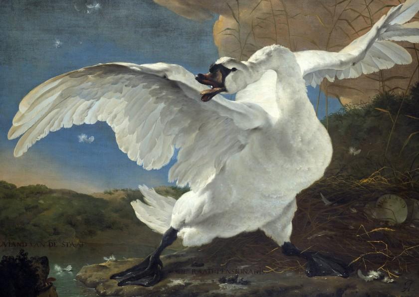 Kunstkaarten - Kunstkaart van Jan Asselijn. De bedreigde zwaan