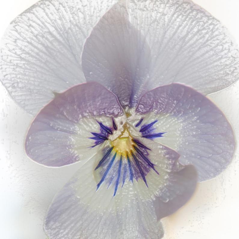Kunstkaarten - Plastic viooltje