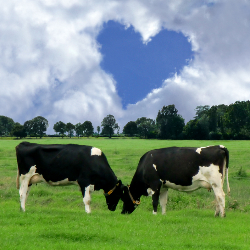 Liefde kaarten - Echte liefde Koeien