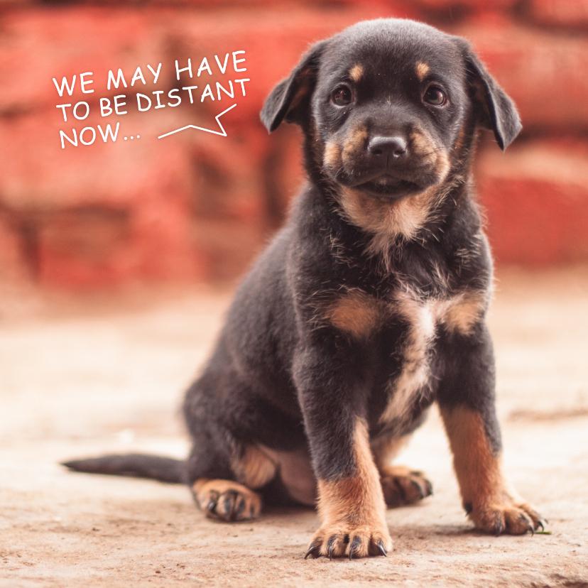 Liefde kaarten - Ik mis je, kaart met lieve zwarte puppy