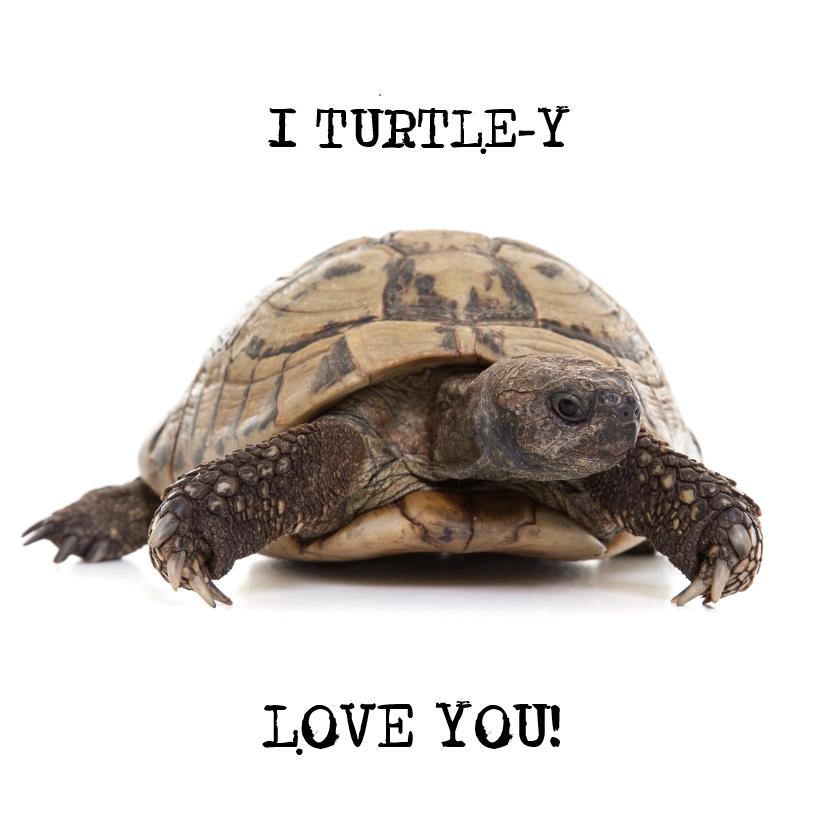 Liefde kaarten - Liefde - I Turtle-y Love You - Schildpad