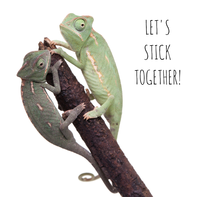 Liefde kaarten - Liefde - Let's stick together - Kameleon