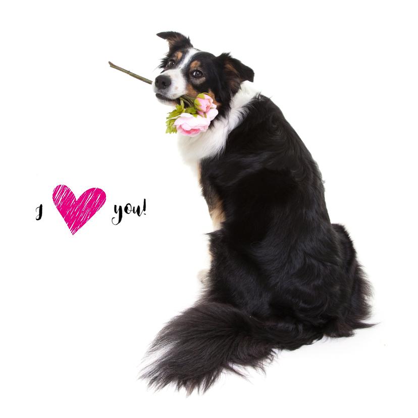 Liefde kaarten - Liefdeskaart - Ik hou van jou - Border Collie met bloem