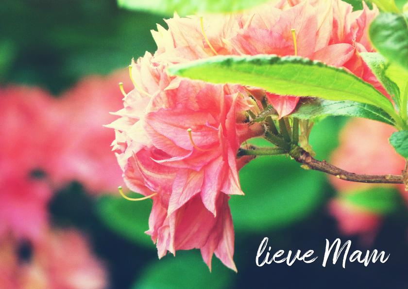 Moederdag kaarten - Moederdag kaart rhododendron
