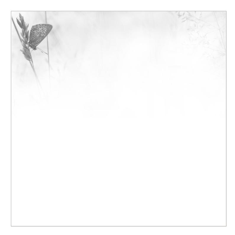 Rouwkaarten - Overlijdensbrief vlinder -z/w-