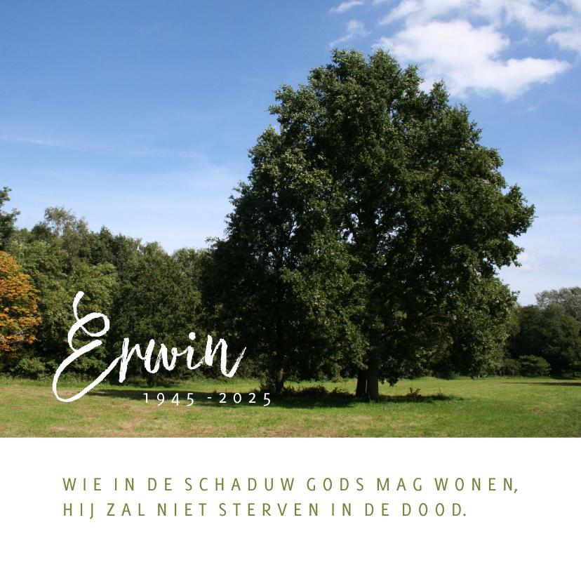 Rouwkaarten - Rouwkaart met foto van boom in landschap