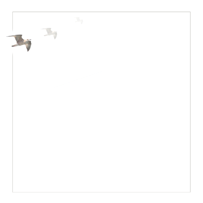 Rouwkaarten - Rouwkaart met meeuw
