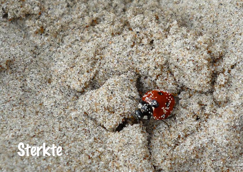 Sterkte kaarten - Lieveheersbeestje in het zand