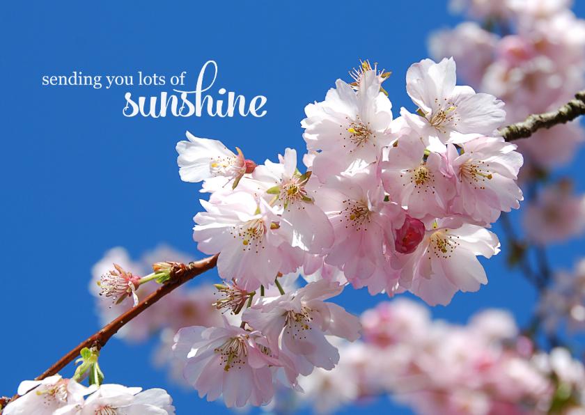 Sterkte kaarten - Sterkte kaart sending you lots of sunshine bloesemtak