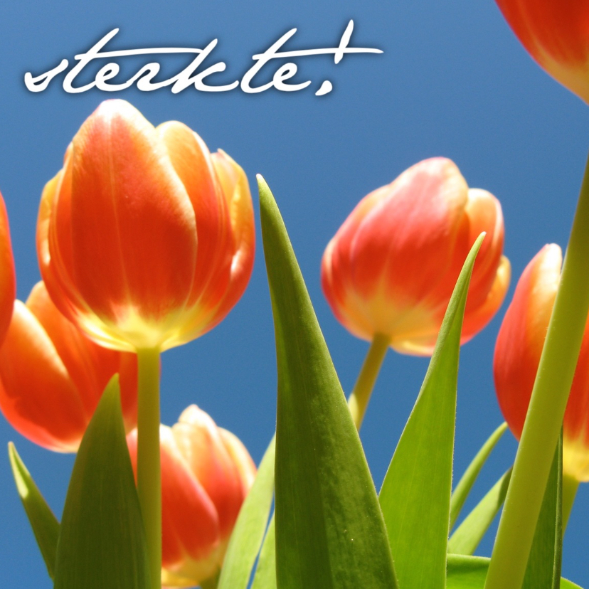 Sterkte kaarten - sterkte kaart tulpen - LB