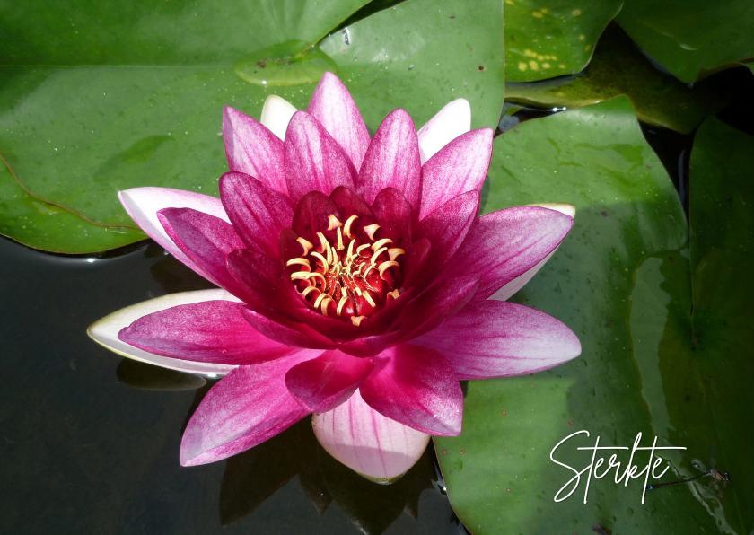 Sterkte kaarten - Sterkte roze waterlelie - lotus