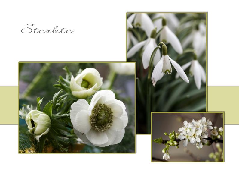 Sterkte kaarten - witte voorjaarsbloemen