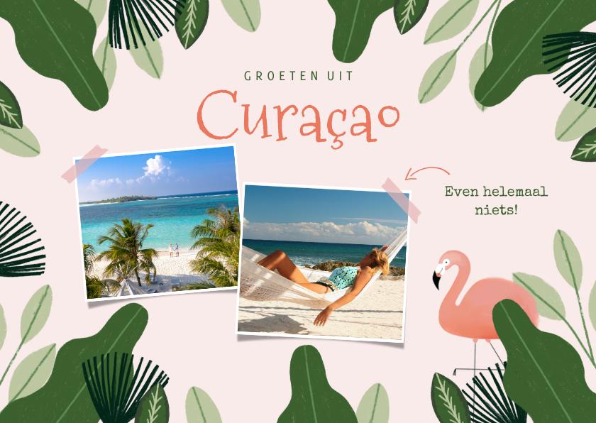 Vakantiekaarten - Tropische vakantiekaart Curacao jungle flamingo en foto's