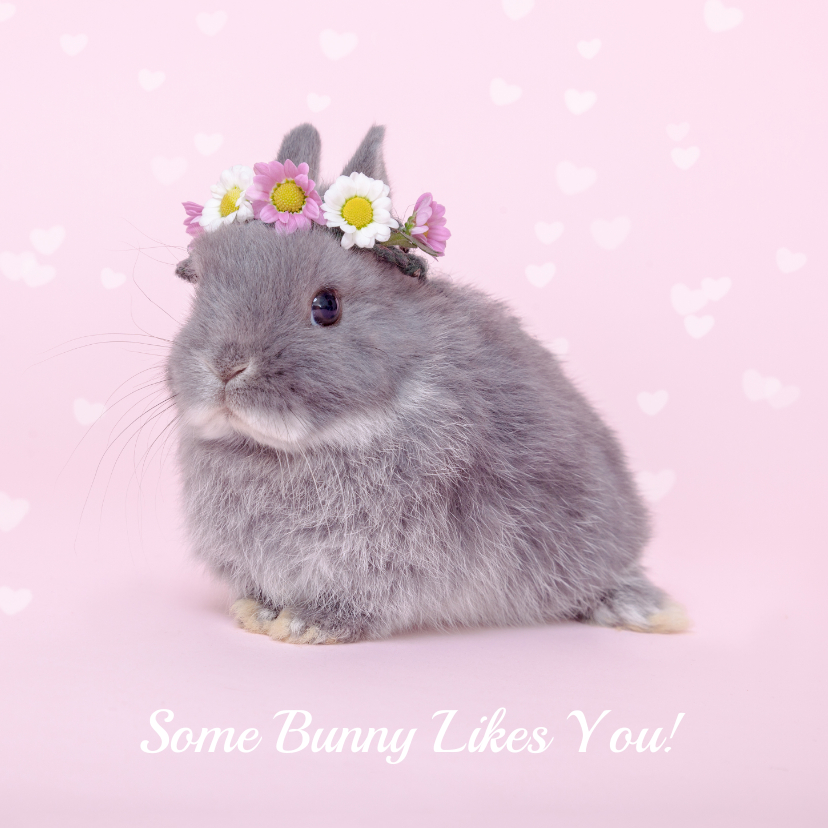 Valentijnskaarten - Valentijn - Some Bunny Likes You