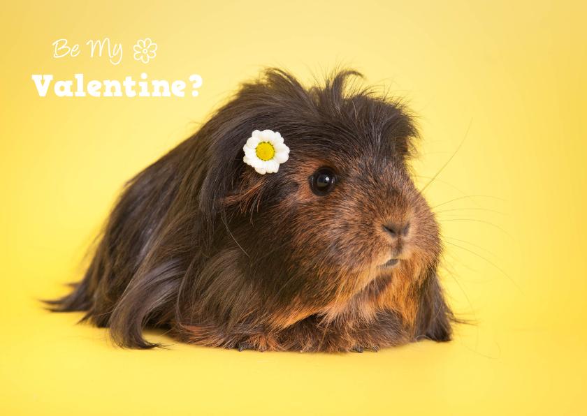 Valentijnskaarten - Valentijnskaart met cavia en madeliefje