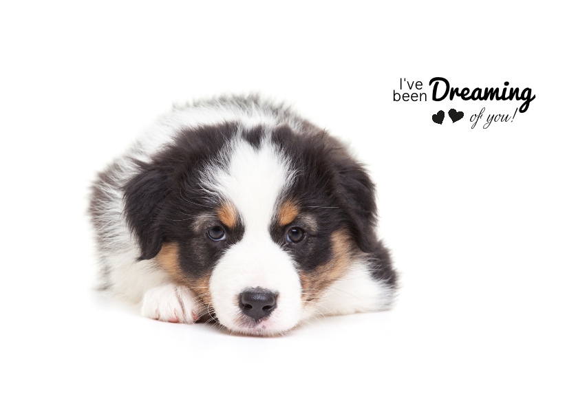 Valentijnskaarten - Valentijnskaart - Puppy - Dreaming of you!