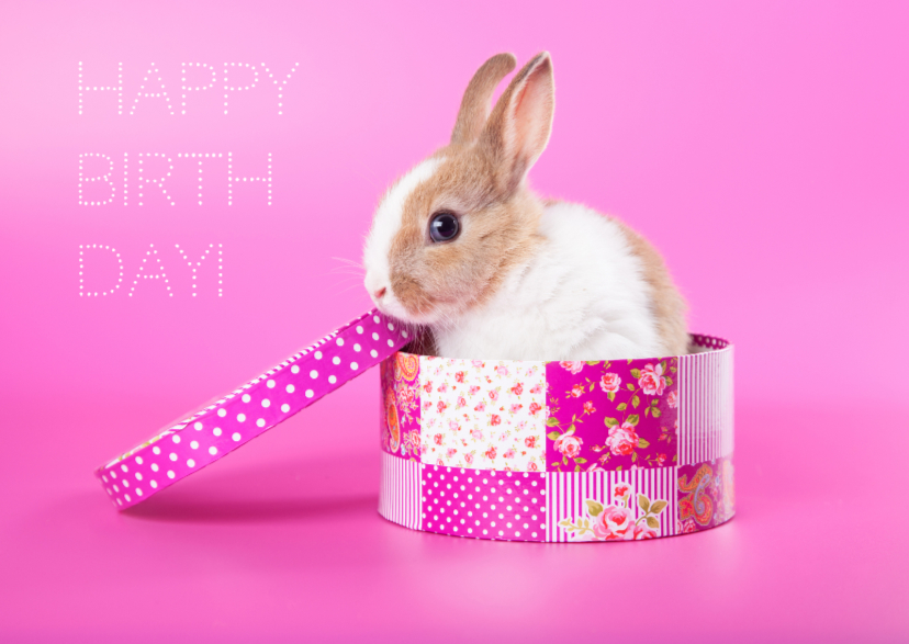 Verjaardagskaarten - Dieren Verjaardagskaart - Konijn cadeau