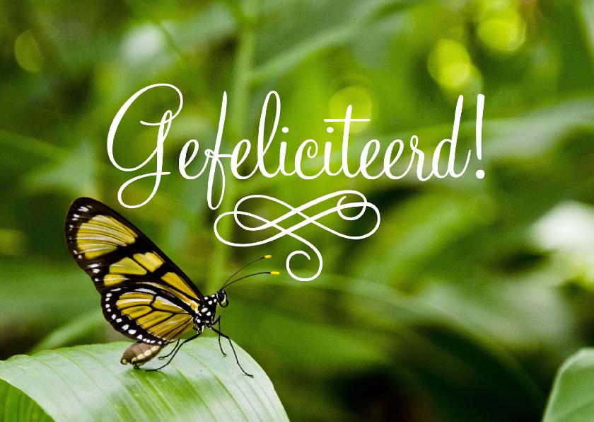 Verjaardagskaarten - Dieren Vlinder Gefeliciteerd
