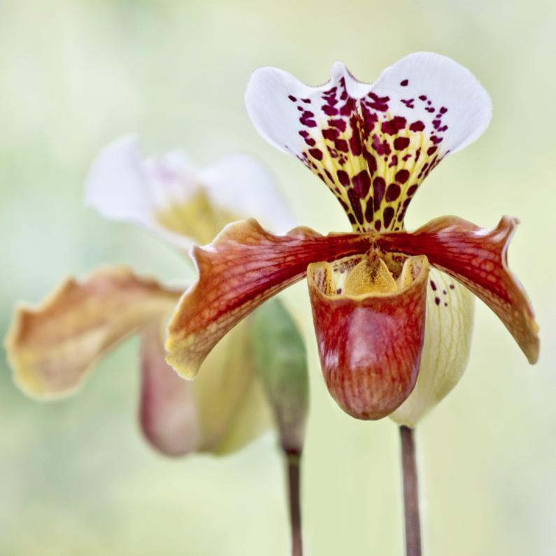 Verjaardagskaarten - Jarig met orchidee