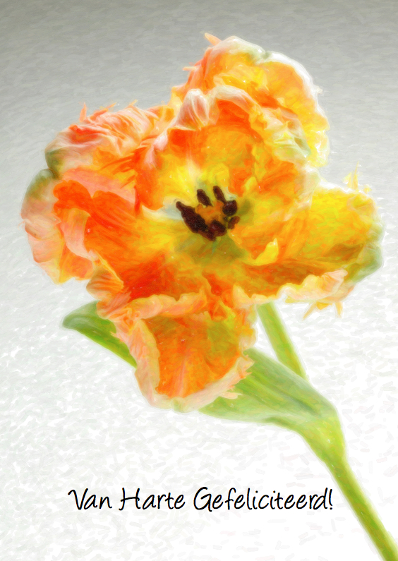 Verjaardagskaarten - Klassiek geschilderde Tulp