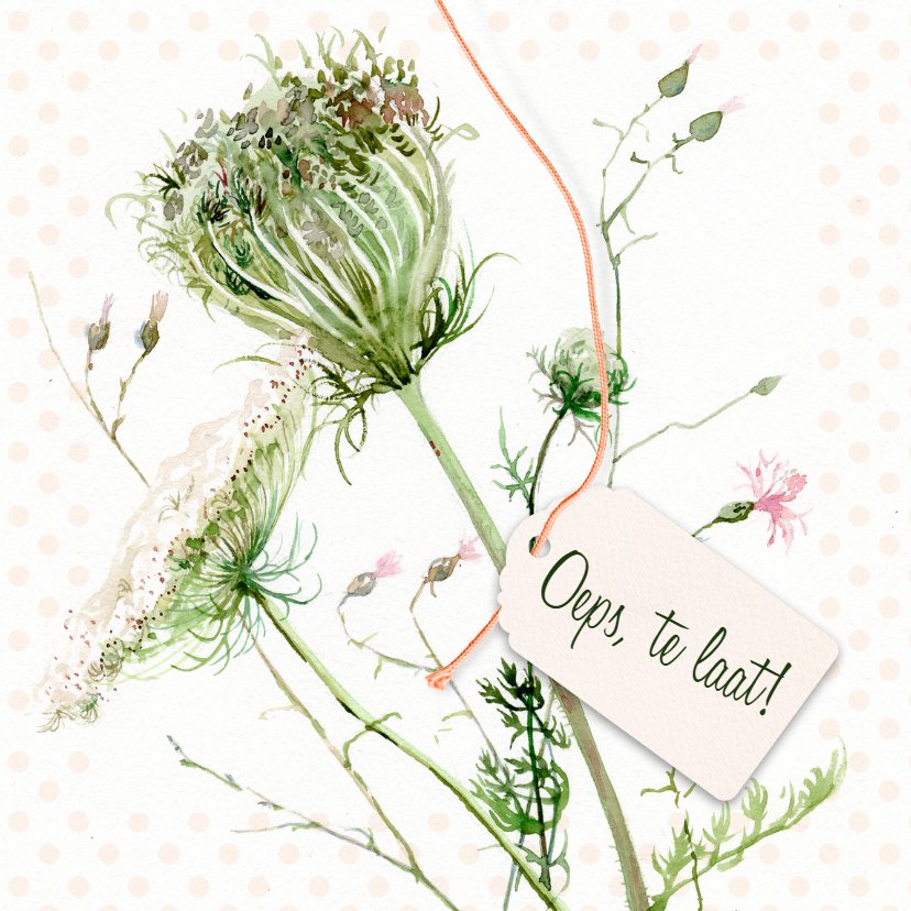 Verjaardagskaarten - Oeps, te laat - Wilde bloemen illustratie