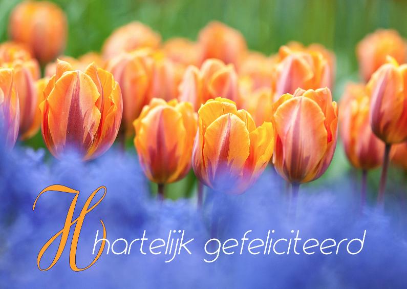 Verjaardagskaarten - Oranje boven met tulpen