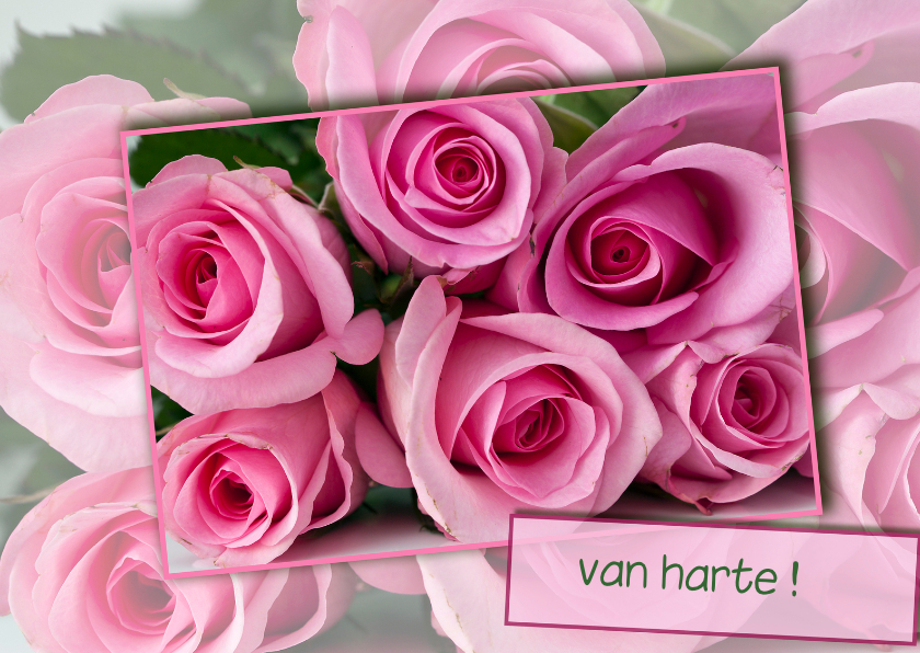 Verjaardagskaarten - roze rozen voor jou