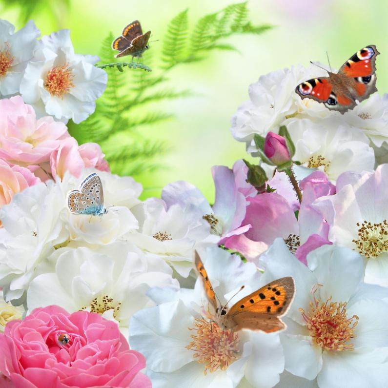Verjaardagskaarten - Rozen en vlinders